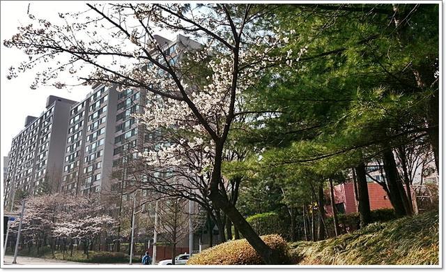 벚꽃3.jpg