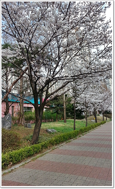벚꽃4.jpg
