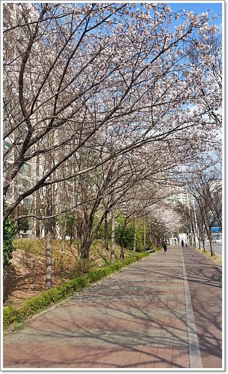 벚꽃19.jpg