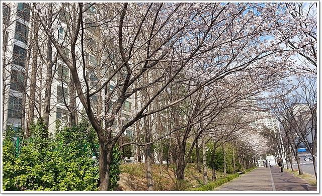 벚꽃20.jpg