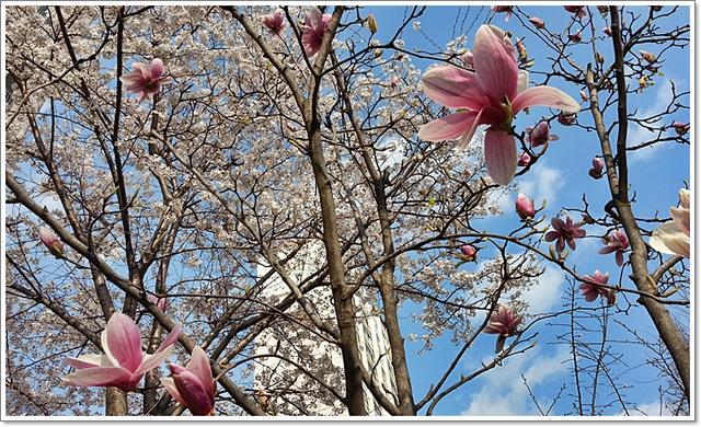 벚꽃22.jpg