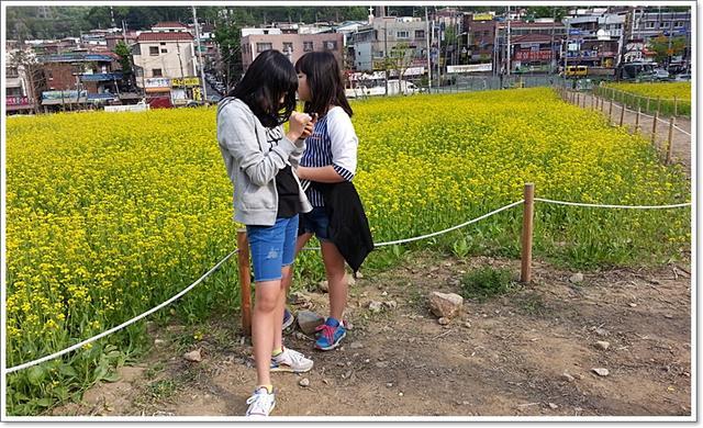 유채꽃16.jpg