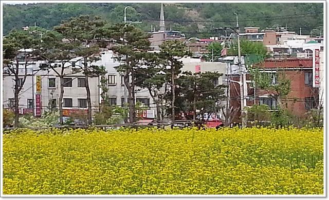 유채꽃18.jpg