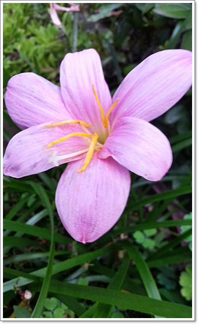 과꽃6.jpg