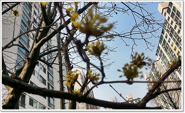 봄소식6.jpg