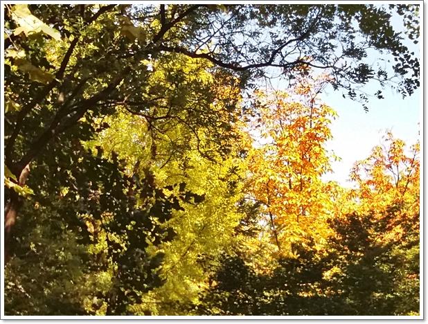 가을양재7.jpg