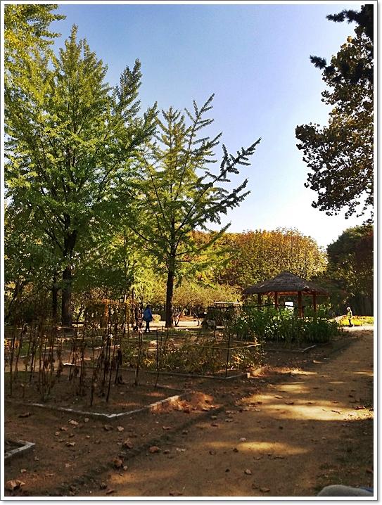 가을양재8.jpg