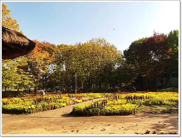 가을양재9.jpg