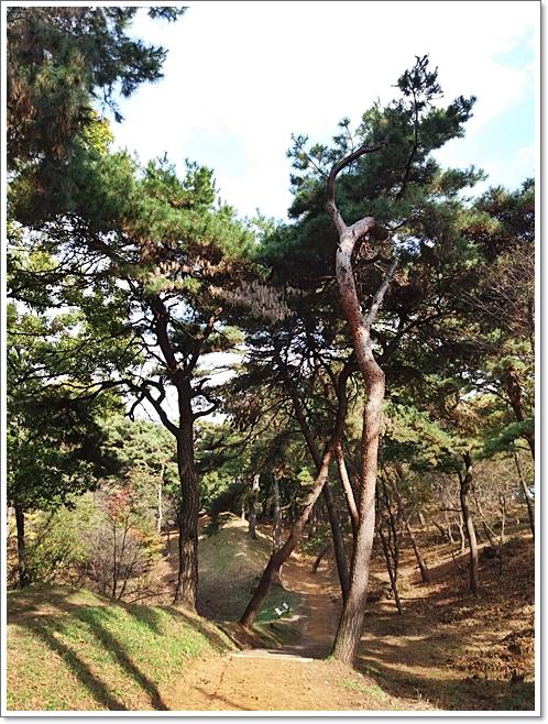 부소산28 소나무.jpg