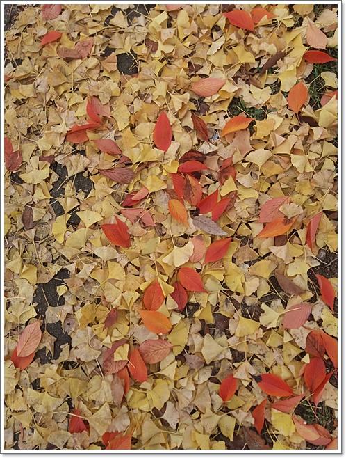 가을4.jpg
