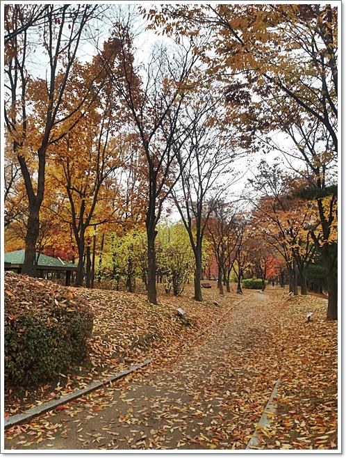 가을6.jpg