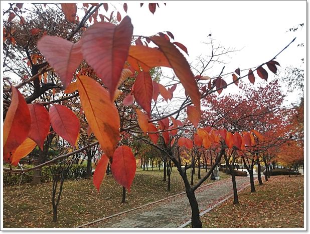 가을8.jpg