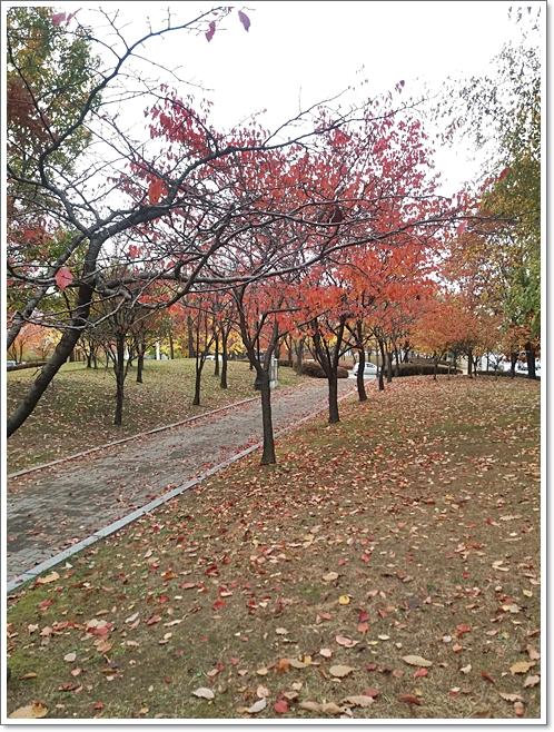 가을9.jpg