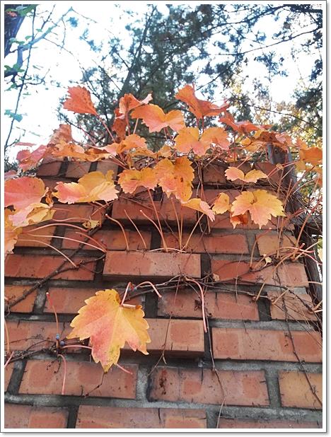 가을11.jpg
