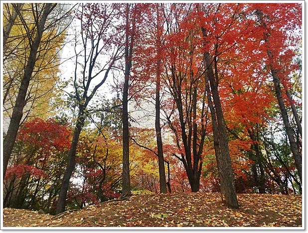가을12.jpg