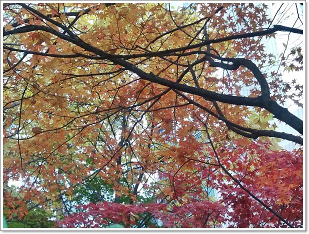 가을13.jpg