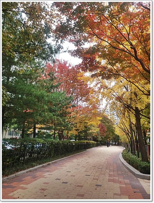 가을14.jpg