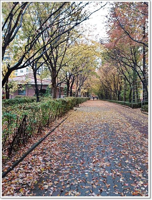가을15.jpg