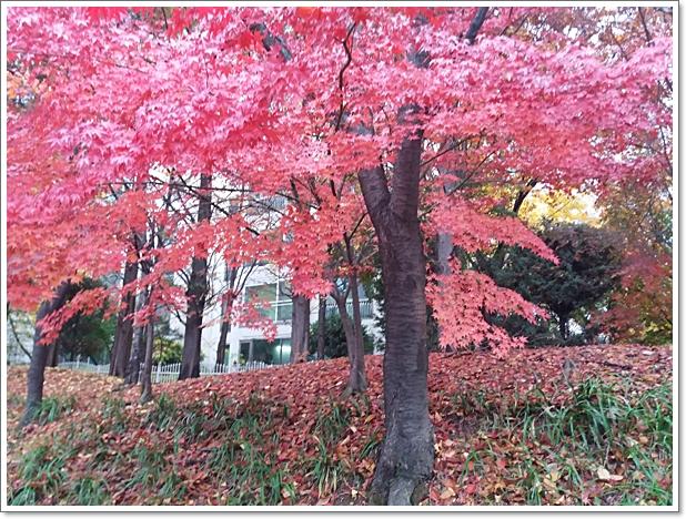 가을16.jpg
