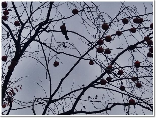 가을17.jpg