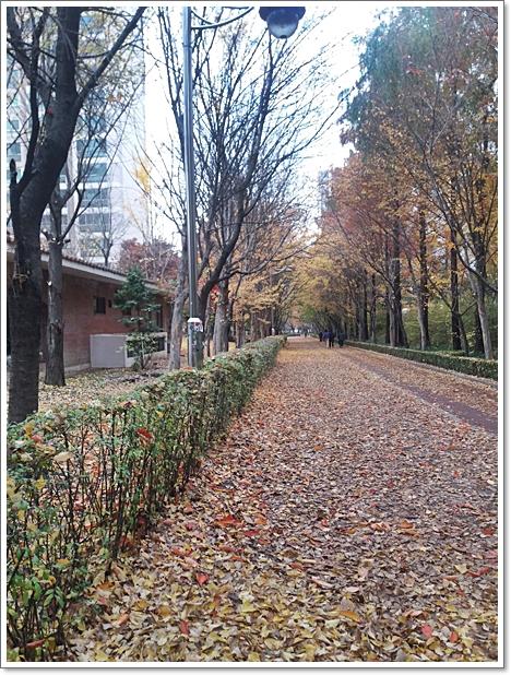 가을18.jpg