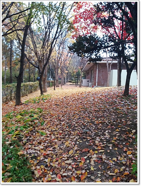 가을19.jpg