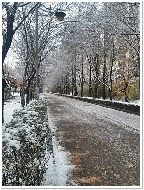 눈6.jpg