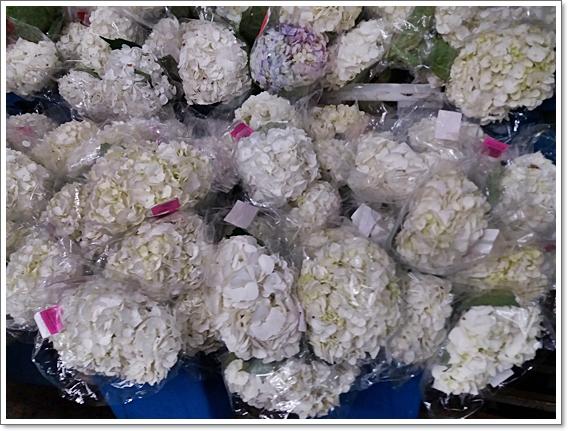 꽃시장17