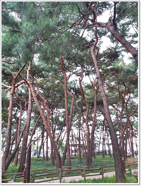 솔밭공원17
