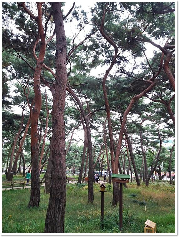 솔밭공원2