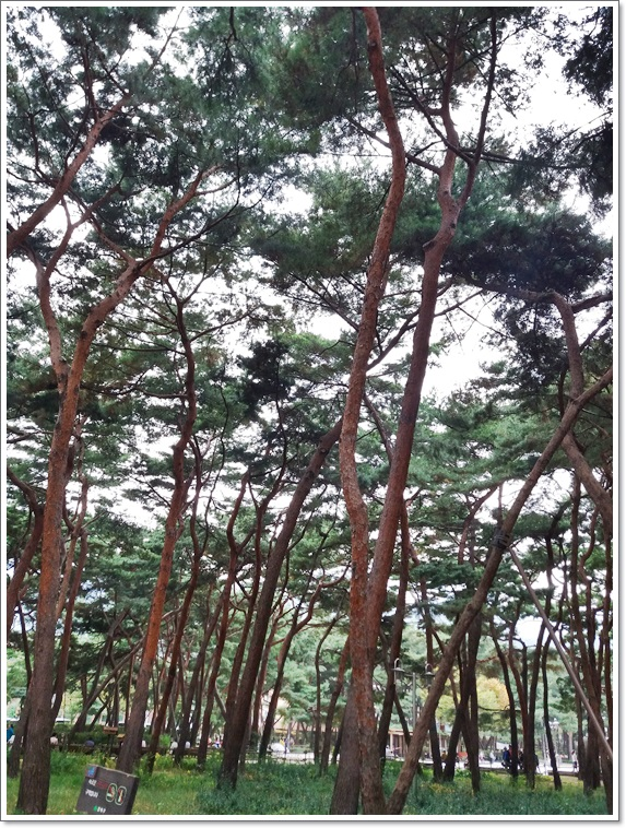솔밭공원9