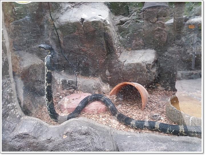 동물원12