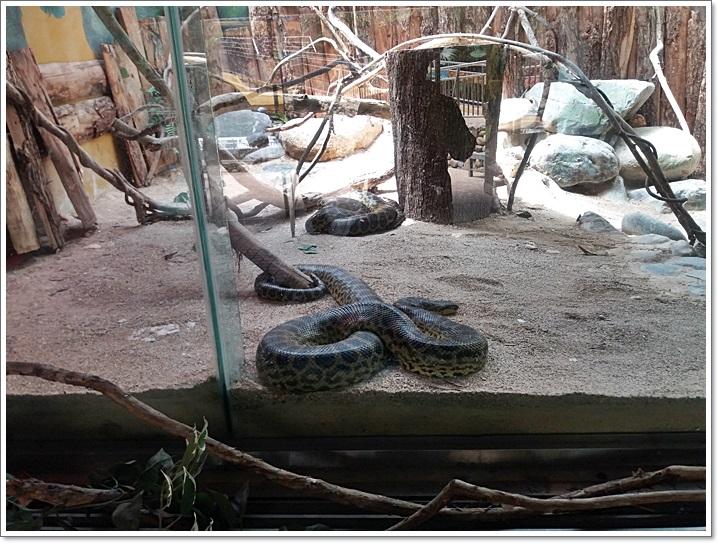 동물원13