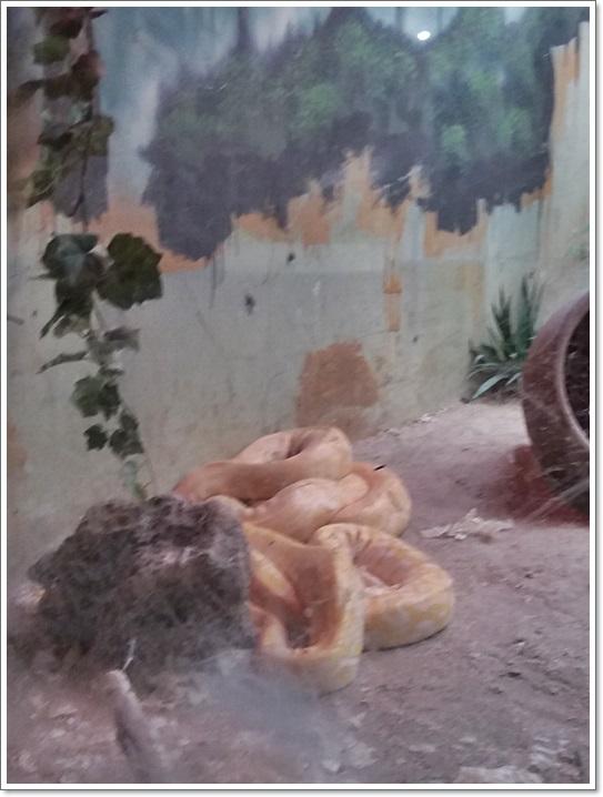 동물원15