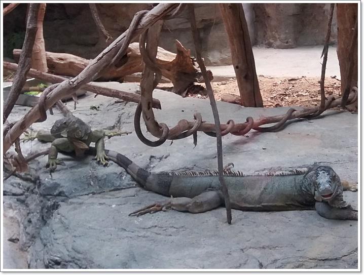 동물원18