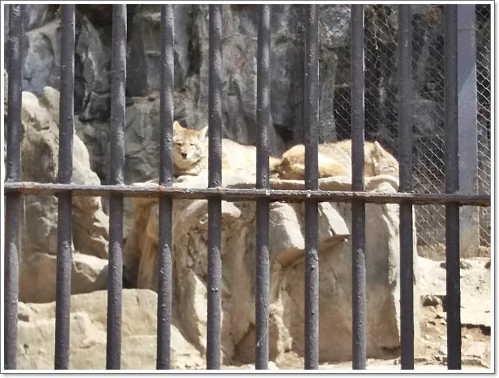동물원19