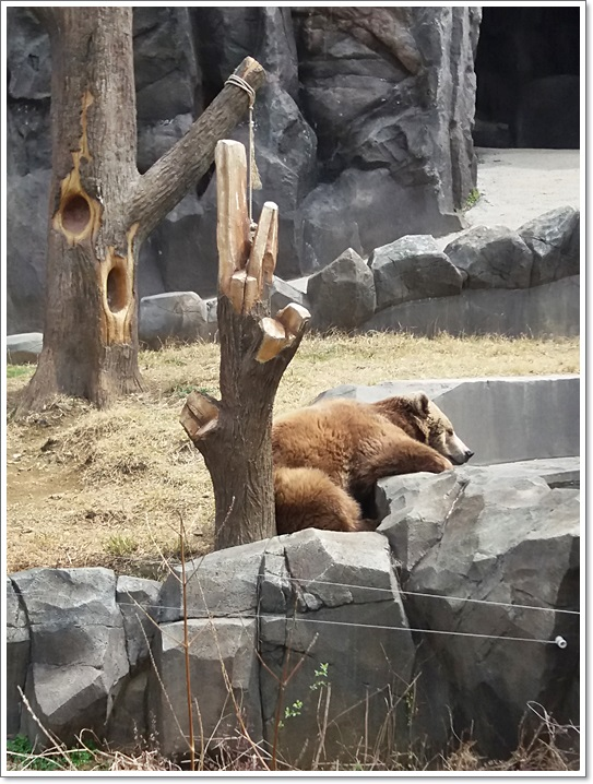 동물원23