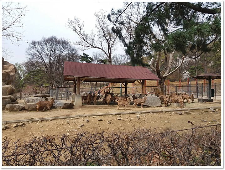 동물원29