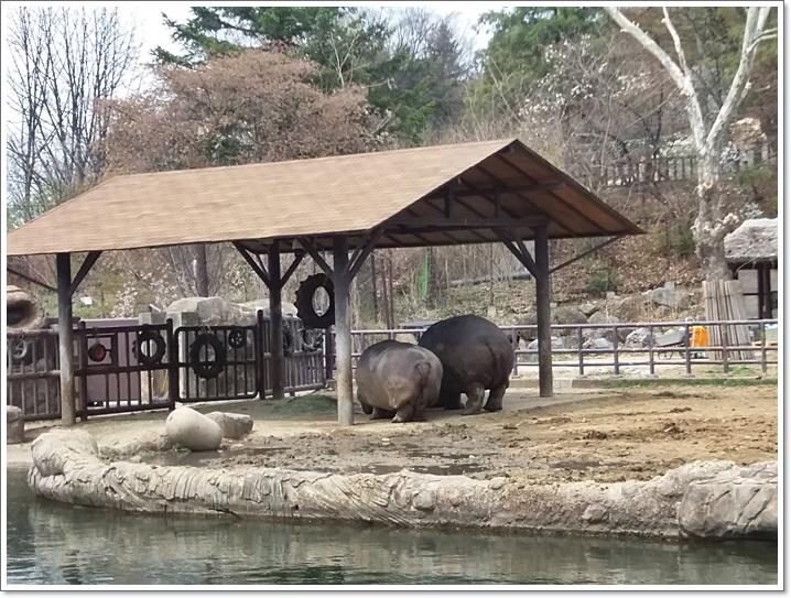 동물원31