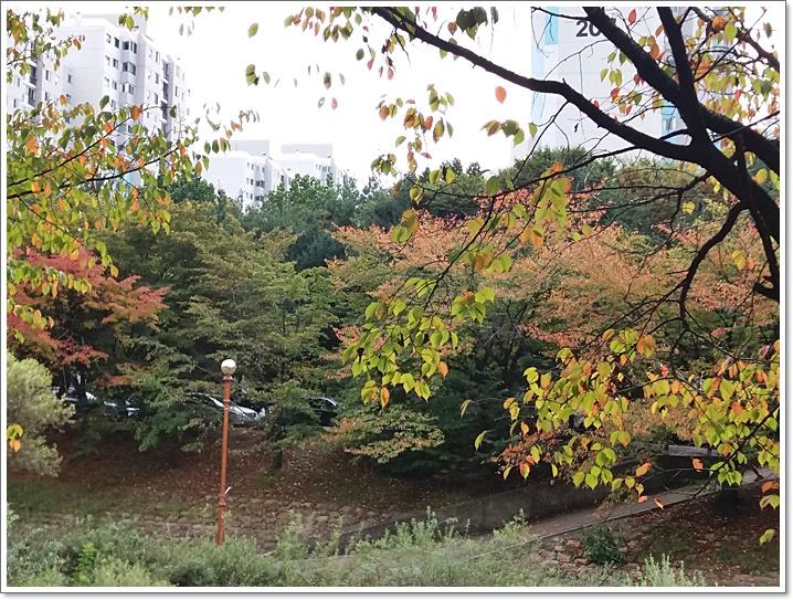 중앙공원14