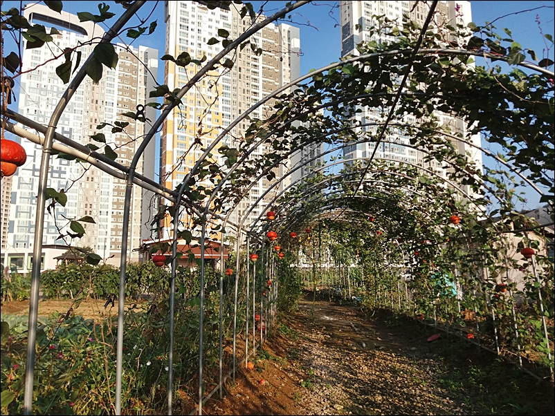 농업공원11