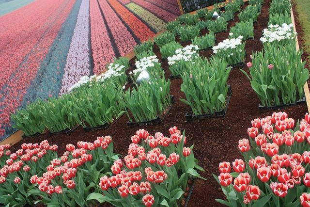 네덜란드 정원.JPG