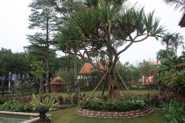 인도네시아 정원.JPG