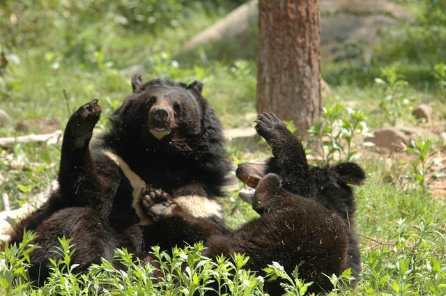 5.반달가슴곰(공단1).jpg