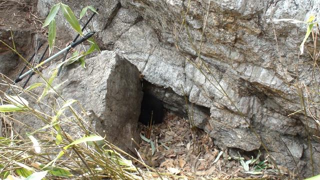 지리산반달곰새끼출산_연구원들을경계하며바위틈에고개를집어넣고엉덩이만보여주고있다_좋은사진못올려죄송.jpg