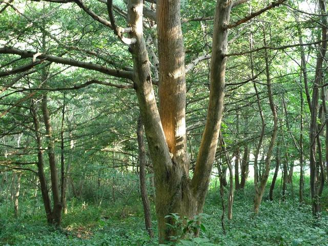 장흥 가지산 서어나무숲.JPG