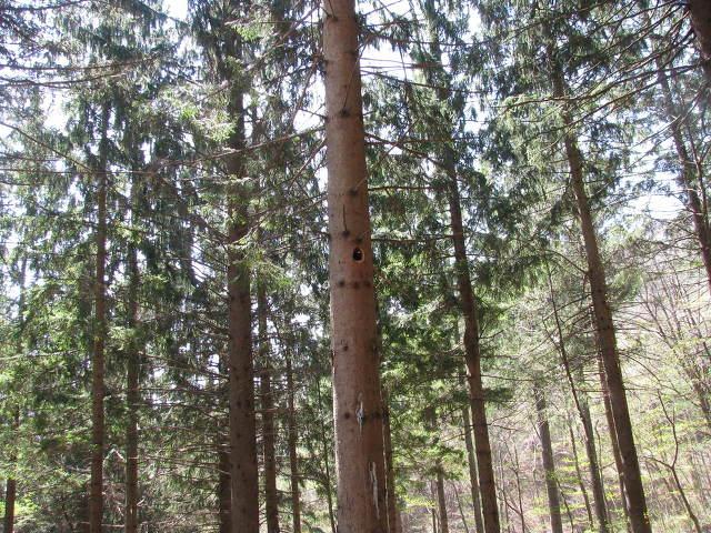 덕유산 가문비나무숲.jpg