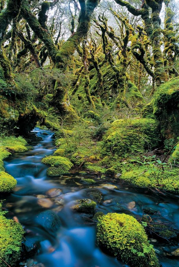 1.Fiordland national park_Routeburn track(1).jpg