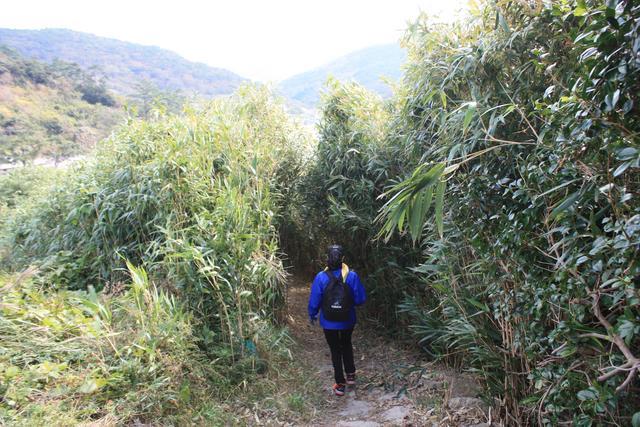 2.대나무숲길.JPG
