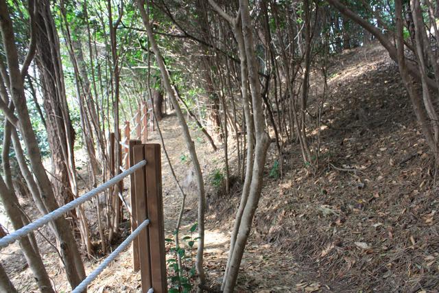 3.동백숲길 가로.JPG